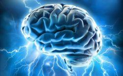 brain2-500x310