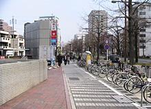 桜通りに沿った歩道